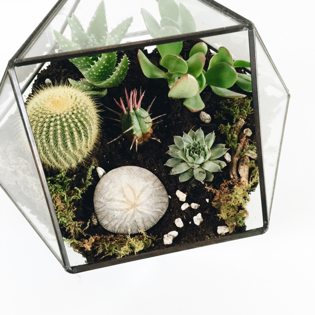 Terrarium Tutorial - Headed Somewhere Blog