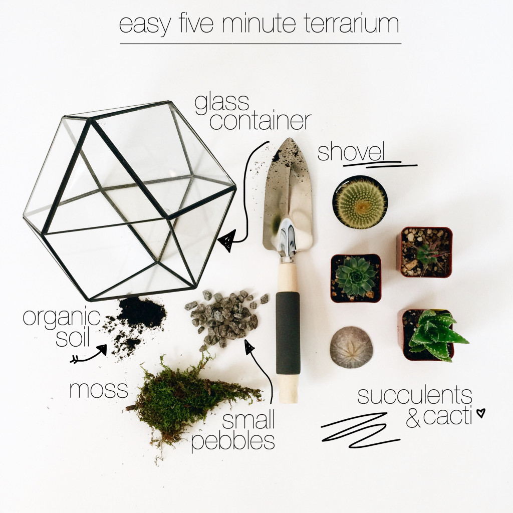 Headed Somewhere Blog - Terrarium Tutorial